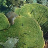 กิจกรรม-csr-ปลูกปะการังเพื่อทดแทน-สร้างบ้านให้ปลา-เกาะทะลุ-เกาะสังข์