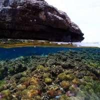 ดำน้ำตื้น-snorkeling-เรือสปีดโบ๊ทใหญ่และใหม่-โทร-062-892-9946-เกาะร้าน